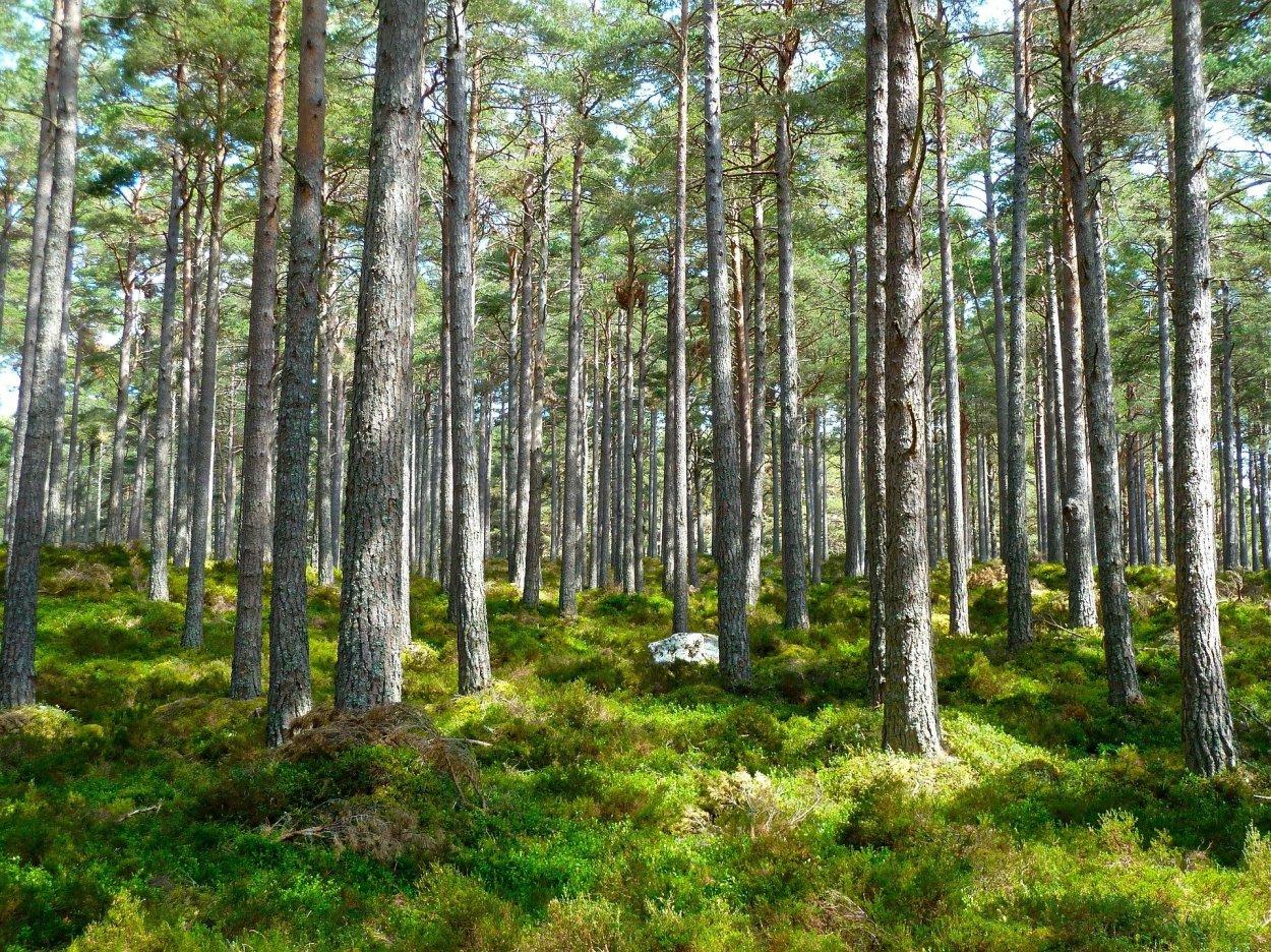 Bild eines schönen grünen Waldes